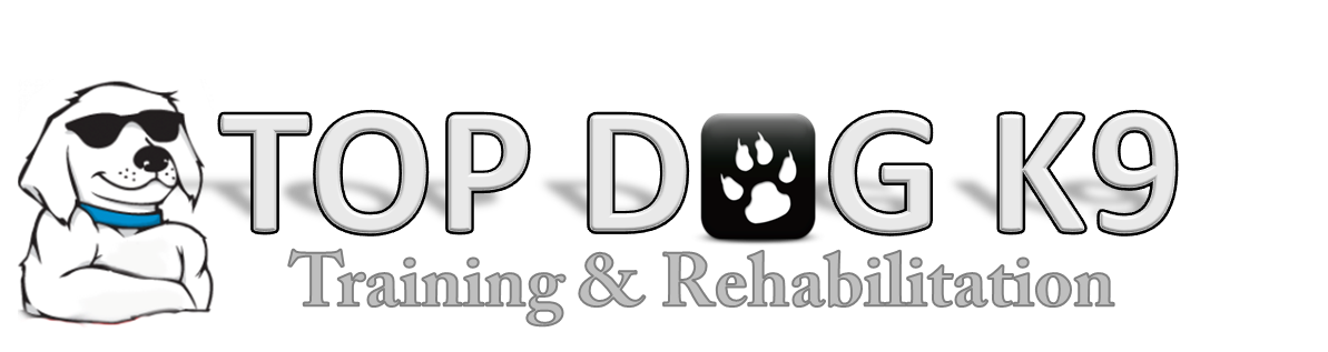 Dog Training and Rehabilitation